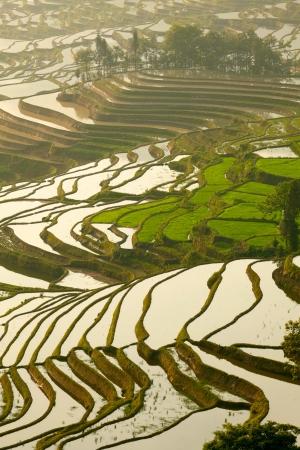 yuanyang: Rice terraces  Yunnan, China  Stock Photo