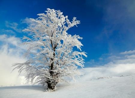 frozen lake: Winter tree Stock Photo