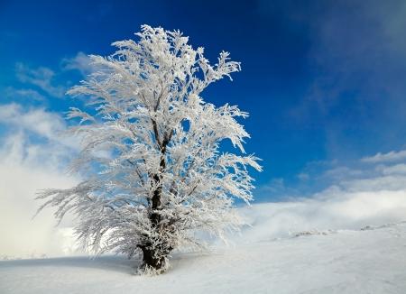 styczeń: Zimowe drzewa Zdjęcie Seryjne