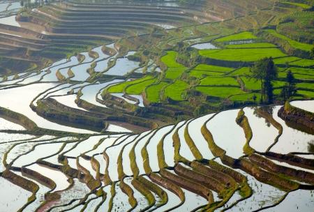 Rice terraces. Yunnan, China photo