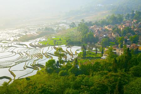 yuanyang: Rice terraces