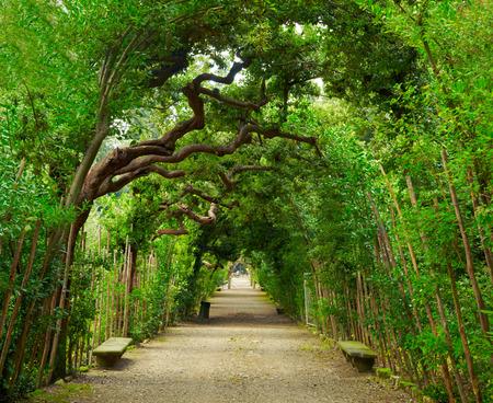 garden city: Boboli Gardens. Florence Italy