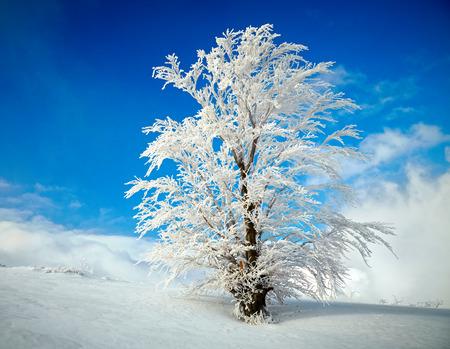 jungle scene: Frozen tree on winter field and blue sky Stock Photo