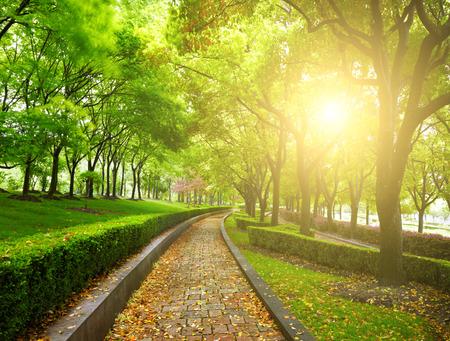 garden bench: Green city park