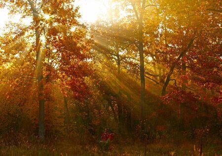 autumn forest: Sunlights nella foresta di autunno