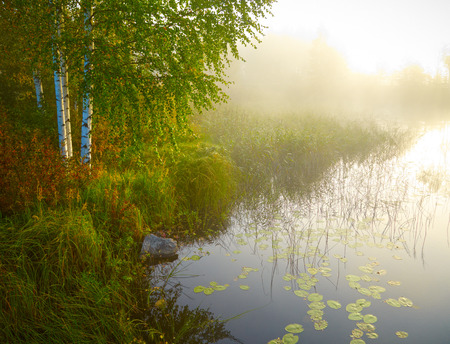 Landscape with birch, lake and green grass in morning lights. Finland Reklamní fotografie