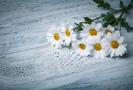 daisies: Daisy flowers on white grunge wooden background Stock Photo