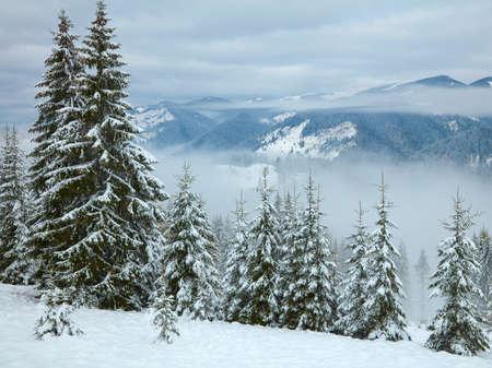 winter trees: Winter trees in the mountains. Carpathians, Ukraine