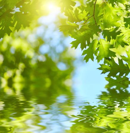 Verse groene bladeren die in het water achtergrond. Zon schijnt door de bomen Stockfoto