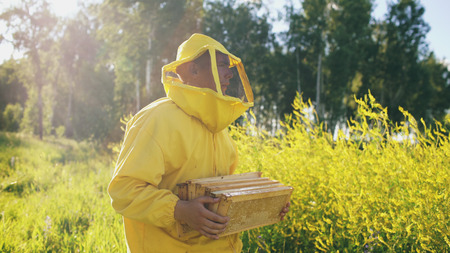beekeeper man with wooden frame walking in blossom field while working in apiary Stock Photo
