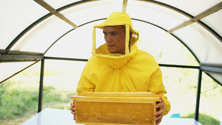 beekeeper with wodden frames walking and inspecting beehives in apiary