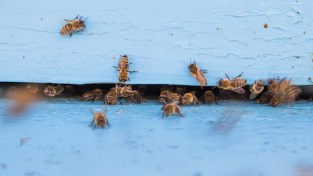 Closeup of bees flying into beehive entrance on summer day Banco de Imagens - 91358310