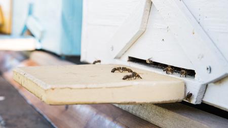 夏の日にミツバチの入り口に飛んでいくミツバチのクローズアップ 写真素材