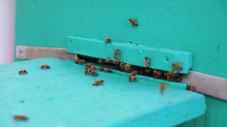 Closeup of bees flying into beehive entrance on summer day