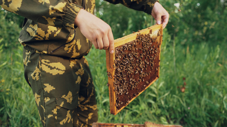 Young beekeeper man holding wooden frame with bees for checking while working in apiary Stock Photo