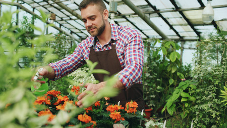 Attractive man gardener in apron watering plants and flowers with garden sprayer in greenhouse Stock Photo