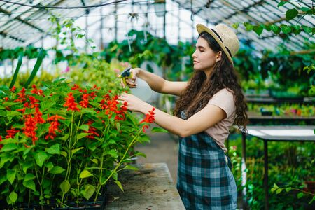 Young woman in apron and hat is spraying water on plants in greenhouse using spray bottle enjoying work with nature. Florists, agriculture and job concept. 免版税图像