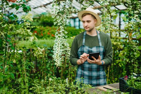 Portrait of handsome young man in apron using tablet in glasshouse working alone with modern device touching screen. Farming, people and technology concept. 免版税图像