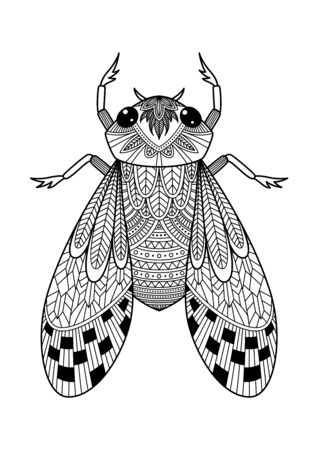 Adult doodle antistress coloring book page beetle bug. Insect black and white patterned illustration
