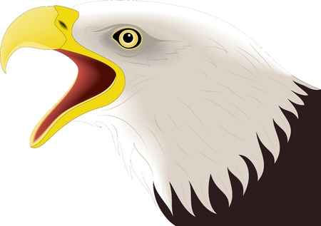 Illustration of eagle Stock Vector - 24747702