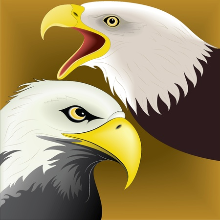 Illustration of eagle Stock Vector - 24747704