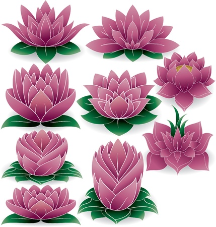 illustration of colored set of lotus  Vector