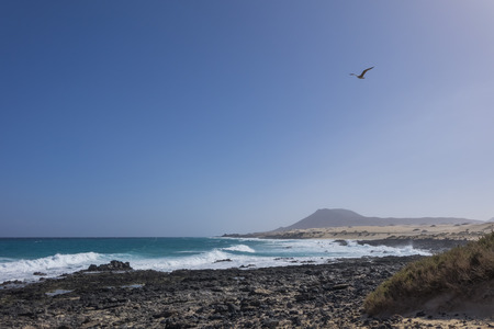 hazy: Seagull flying in a blue sky with hazy Mountain backdrop on Corralejo beach in Fuerteventura, Las Palmas