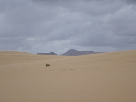 corralejo: Natural-park of Corralejo under a grey sky with a sandstorm in Fuerteventua the Canary- Islands, Spain Stock Photo