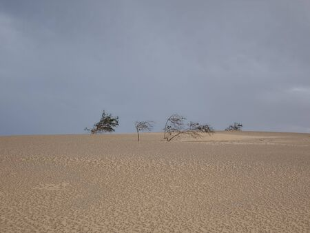 grey  sky: Natural-park of Corralejo under a grey sky with a sandstorm in Fuerteventua the Canary- Islands, Spain Stock Photo