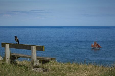 Beautiful Brixham landscape from Berry Head Brixham Devon England looking out to a calm sea with a bird on a bench