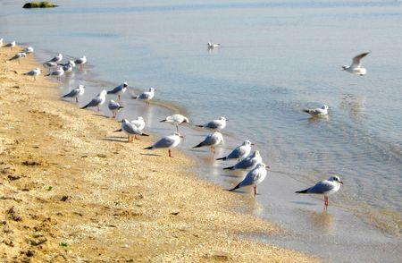seagulls Stock Photo - 4798209
