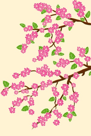 background with cherry blossom Vector