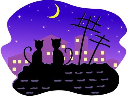 bilding: Cats at night