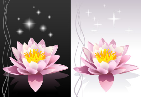 detailed vector lotus flower with reflection on black and white abstract oriental backgrounds