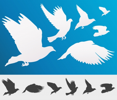 graceful: Graceful flying birds silhouettes for your design - isolated Illustration