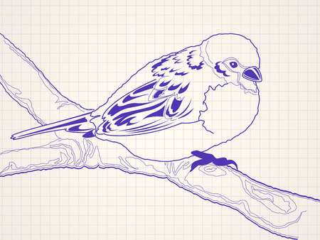 line drawing: Hand drawn sparrow bird sitting on a branch - ballpoint pen drawing on a squared paper Illustration