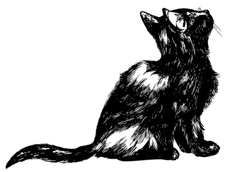 look at: Hand drawn cat looking up - detailed high quality ink illustration