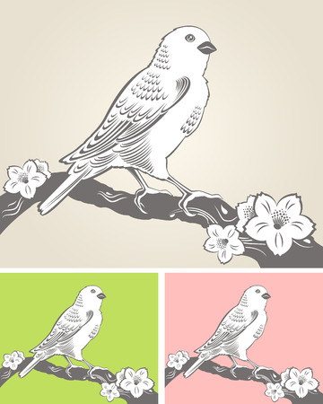 canary bird: Elegant spring background with a hand drawn bird on a blooming tree branch Illustration