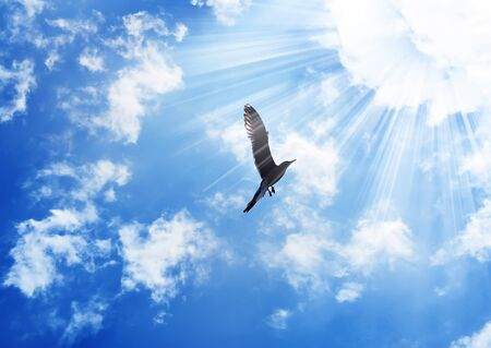 alone bird: bird flying to the sun