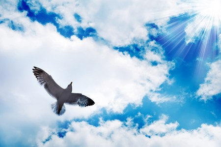 bird flying at sky photo