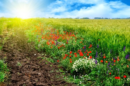 Beautiful summer field landscape photo