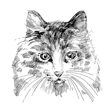 cat drawing Vector