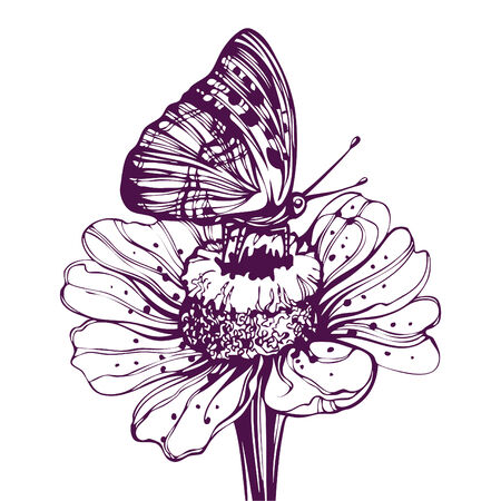 butterfly sitting on a daisy Stock Vector - 7860103