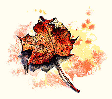 red maple leaf watercolor Vector