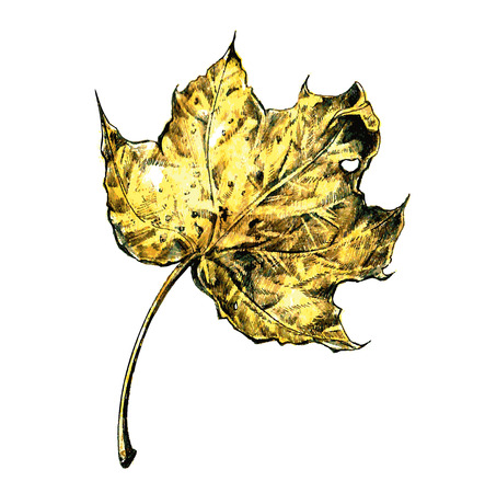 hand made: yellow dry autumn leaf isolated on white Illustration