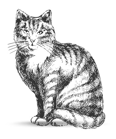 cat drawing: gato de dibujo  Vectores
