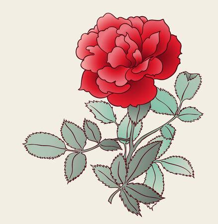 passion flower: rose drawing Illustration