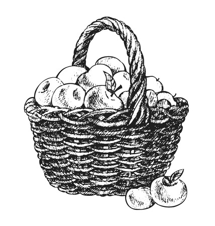 apples basket: apple basket drawing Illustration