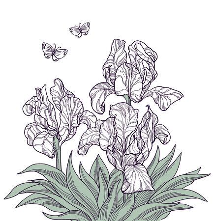 eleganz: Hand drawn Blumen und Schmetterlinge isoliert Linie Kunst Illustration