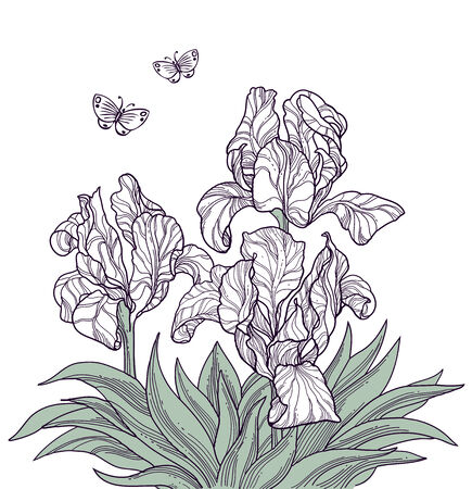 flore: hand drawn flowers and butterflies isolated line art